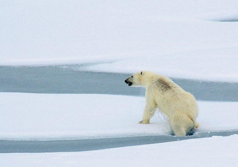 Un moratoire pour protéger l'Arctique !