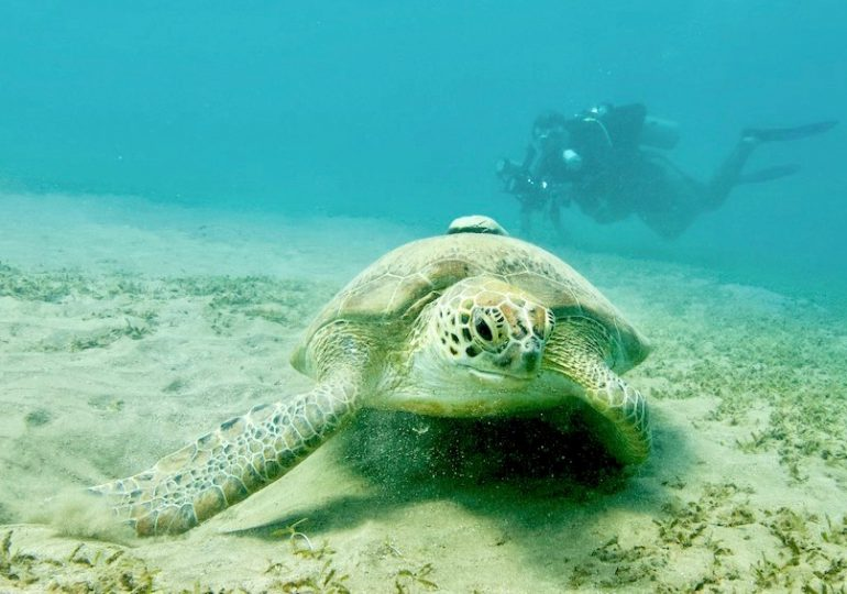 Red Sea: diving in a fascinating bay with turtles