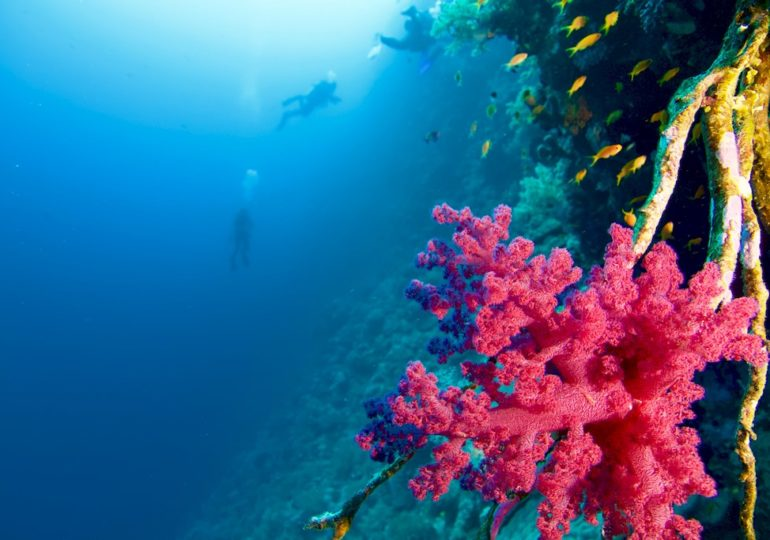 Private dive on one of the most beautiful sites of Red Sea