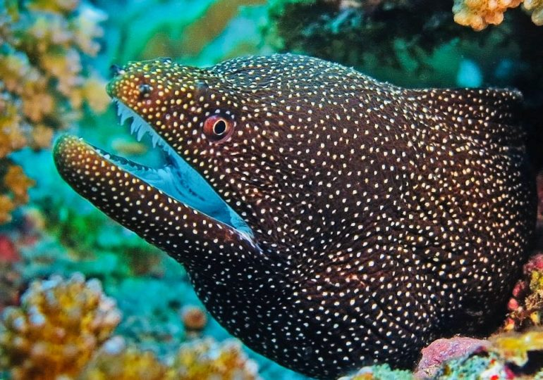 Should we be afraid of moray eels?