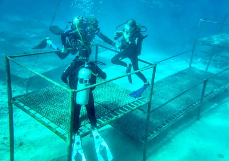 Diving holidays: 3 good reasons to do a check dive