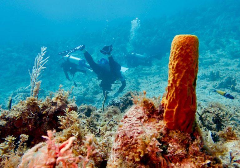 Plonger en Jamaïque : focus sur une destination parfois oubliée