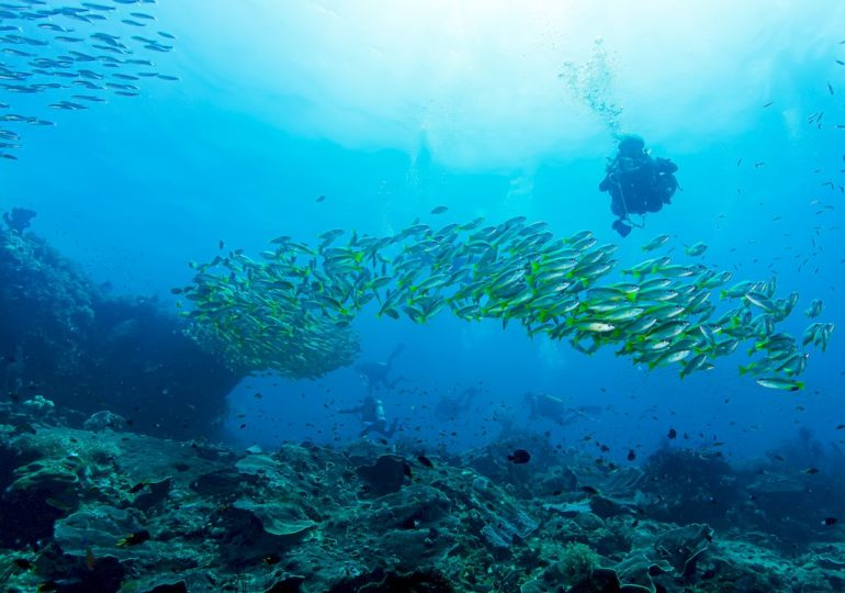 Diving and eating fish: the unavoidable contradiction ?